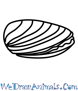How to Draw a Mussel in 5 Easy Steps