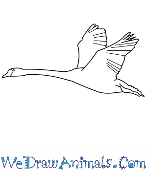 How to Draw a Mute Swan in 8 Easy Steps