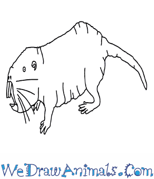 How to Draw a Naked Mole Rat in 9 Easy Steps