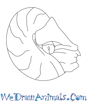How to Draw a Nautilus in 5 Easy Steps