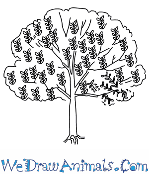 how to draw a neem tree