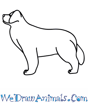 How to Draw a Newfoundland Dog in 6 Easy Steps