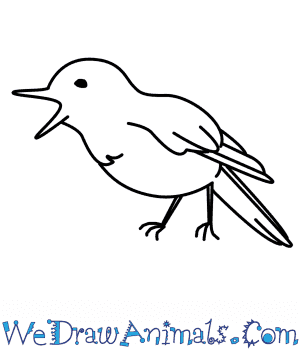 How to Draw a Nightingale in 7 Easy Steps