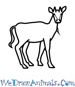 How to Draw a Nilgai in 9 Easy Steps