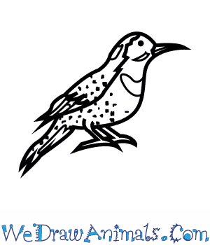 How to Draw a Northern Flicker in 6 Easy Steps