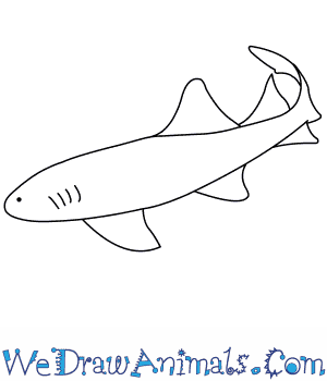 How to Draw a Nurse Shark in 7 Easy Steps