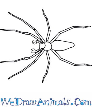 How To Draw A Nursery Web Spider