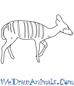 How to Draw a Nyala in 9 Easy Steps