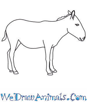 How to Draw an Onager in 8 Easy Steps