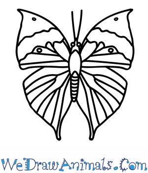 How to Draw an Orange Oakleaf Butterfly in 11 Easy Steps