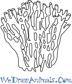 How to Draw an Organ Pipe Coral in 4 Easy Steps