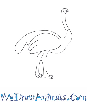 How to Draw an Ostrich in 10 Easy Steps