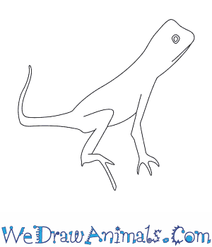 How to Draw an Otocryptis in 6 Easy Steps