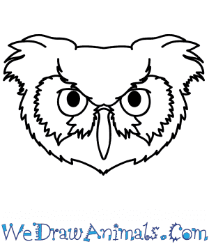 How to Draw an Owl Face in 5 Easy Steps