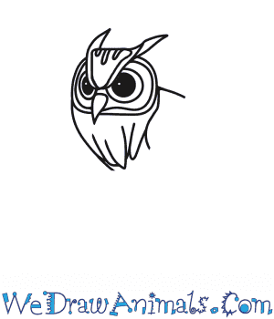 How to Draw an Owl Head in 6 Easy Steps