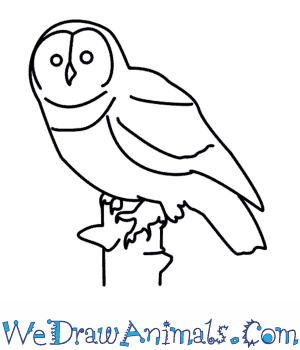 How to Draw an Owl in 8 Easy Steps