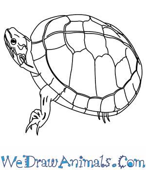 How to Draw a Painted Turtle in 8 Easy Steps