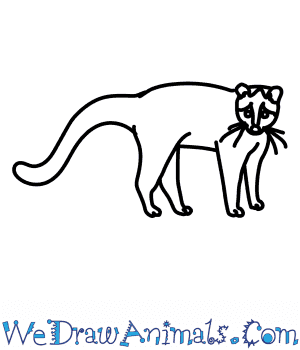 How to Draw a Palm Civet in 6 Easy Steps