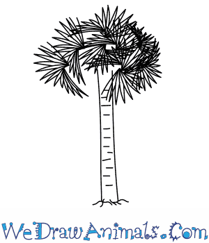 How to Draw a Palmetto Tree in 4 Easy Steps