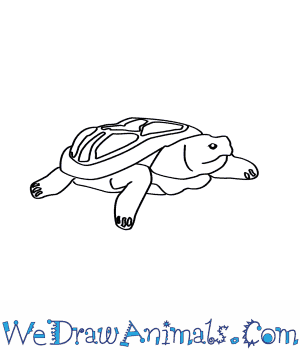 How to Draw a Pancake Tortoise in 7 Easy Steps