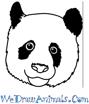 How to Draw a Panda Face in 4 Easy Steps