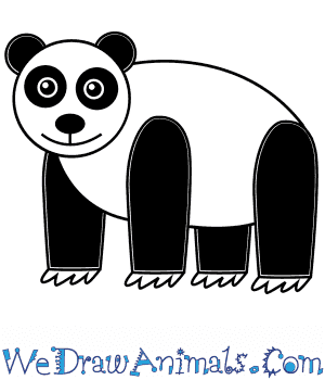 How to Draw a Panda For Kids in 6 Easy Steps