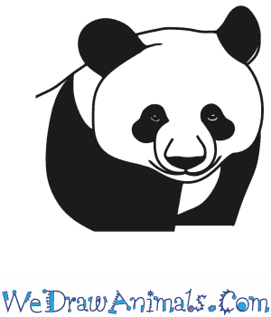 How to Draw a Panda Head in 7 Easy Steps