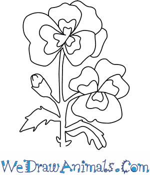 How to Draw a Pansy Flower in 4 Easy Steps