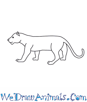 How to Draw a Panther in 9 Easy Steps
