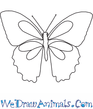 How to Draw a Papilio in 6 Easy Steps