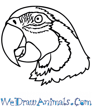 How to Draw a Parrot Face in 6 Easy Steps