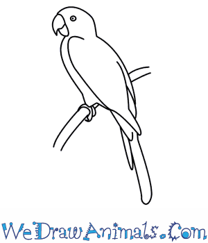 how to draw a parrot - Drawing Sketch For Kids
