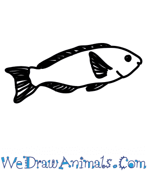 How to Draw a Parrotfish in 7 Easy Steps