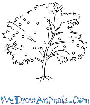 How to Draw a Peach Tree in 5 Easy Steps
