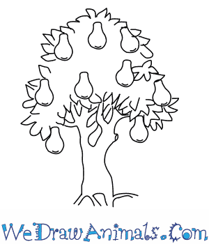 How to Draw a Pear Tree in 5 Easy Steps