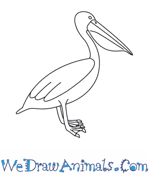 How to Draw a Pelican in 9 Easy Steps