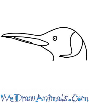 How to Draw a Penguin Face in 5 Easy Steps