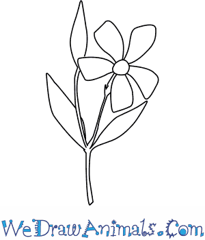 How to Draw a Periwinkle Flower in 4 Easy Steps