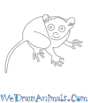 How to Draw a Philippine Tarsier in 6 Easy Steps