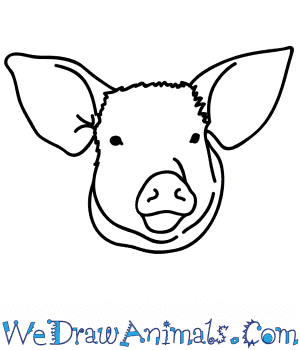 How to Draw a Pig Face in 4 Easy Steps