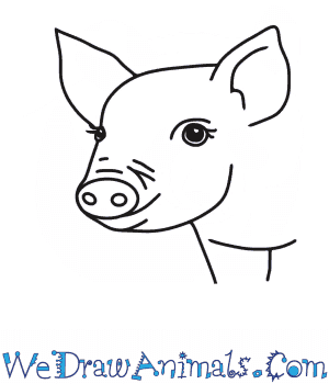 How to Draw a Pig Head in 5 Easy Steps