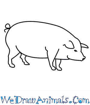How to Draw a Pig in 7 Easy Steps
