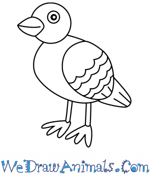 How to Draw a Pigeon For Kids in 6 Easy Steps