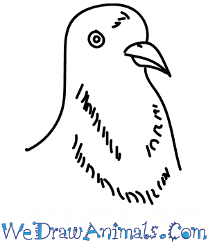 How to Draw a Pigeon Head in 7 Easy Steps