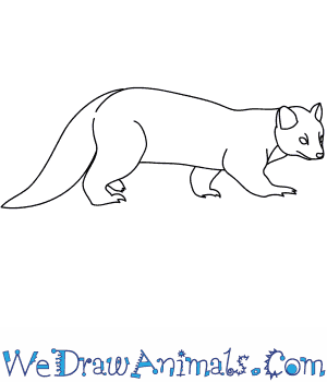 how to draw a pine marten