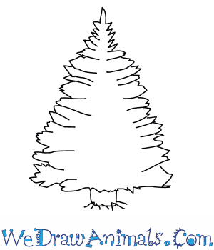 How to Draw a Pine Tree in 4 Easy Steps