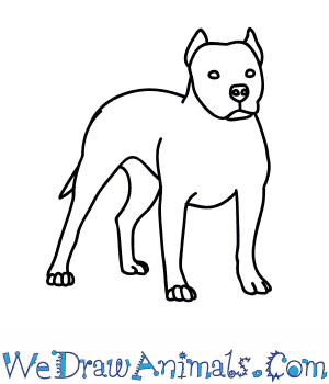 How to Draw a Pitbull Dog in 8 Easy Steps