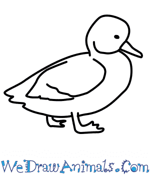 How to Draw a Pochard in 6 Easy Steps
