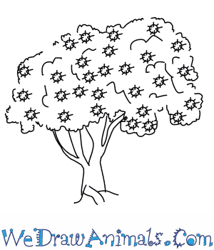 How to Draw a Pohutukawa Tree in 5 Easy Steps