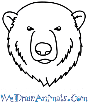 How to Draw a Polar Bear Face in 6 Easy Steps